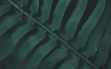 green leaves iMac wallpaper