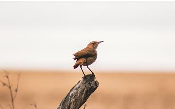 selective focus photography of brown bird on tree All Mac wallpaper