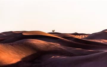 sand dunes during daytime All Mac wallpaper