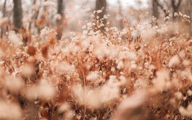 brown grass Mac Wallpaper