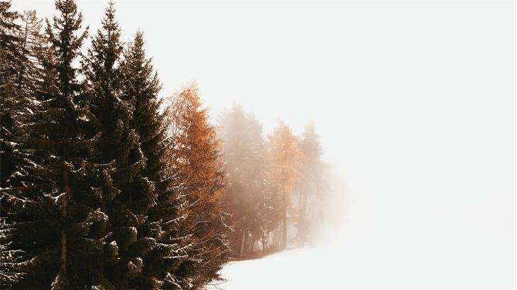 green Evergreen trees in a white snowfield Mac Wallpaper
