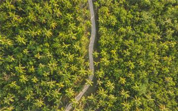 bird's eye photography of road surrounded by trees MacBook Pro wallpaper