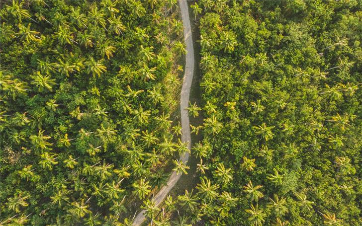 bird's eye photography of road surrounded by trees Mac Wallpaper