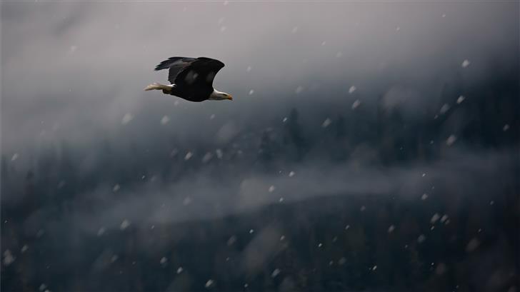 black eagle on mid air Mac Wallpaper