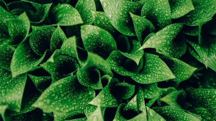 green leafed plants Mac Wallpaper