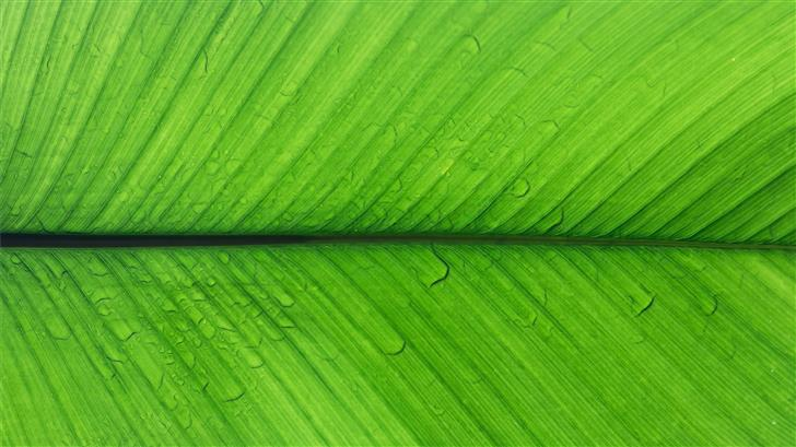 shallow focus photo of green leaf Mac Wallpaper