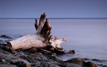 Tree roots on the beach Mac wallpaper