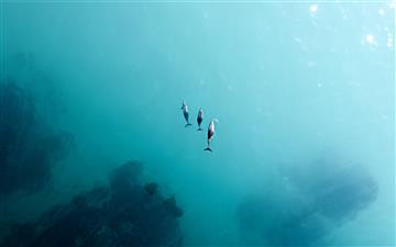 2 person in black wet suit diving on water MacBook Air wallpaper