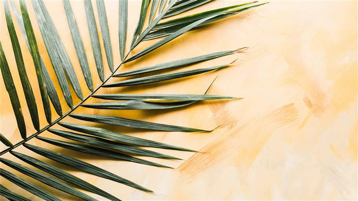palm leaf Mac Wallpaper