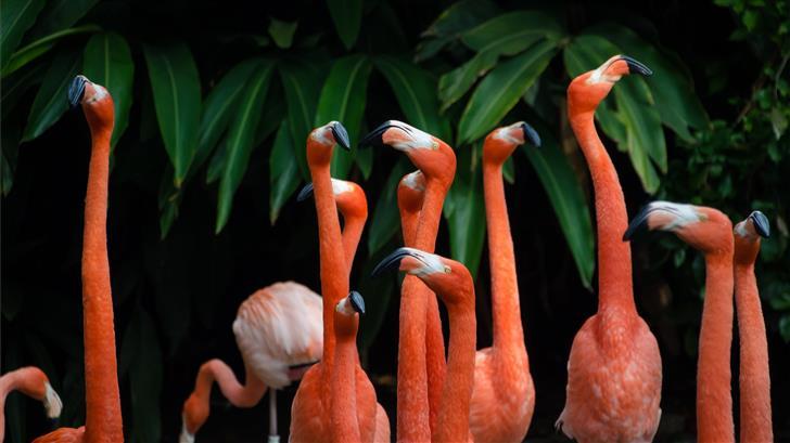 flock of flamingos Mac Wallpaper