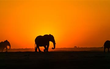 silhouette of elephant on brown sand during sunset All Mac wallpaper