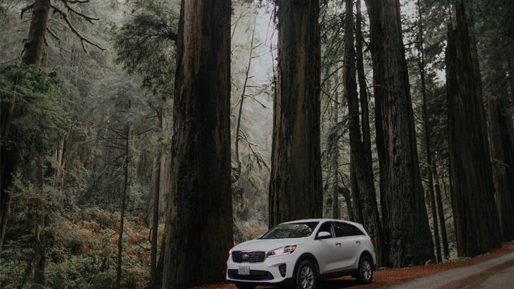 parked white SUV beside tree Mac Wallpaper