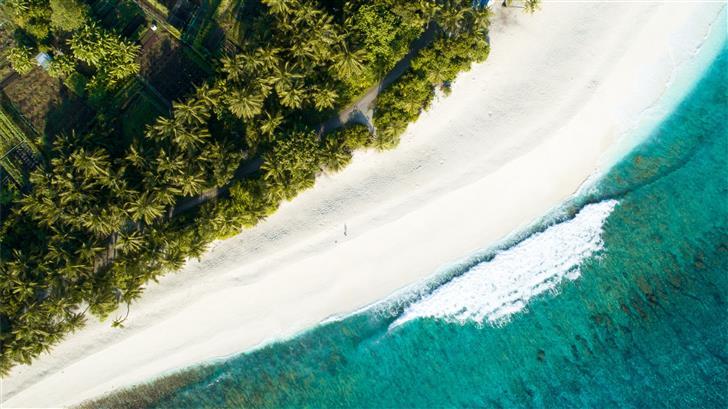 aerial view of palm tree near seashore during dayt Mac Wallpaper