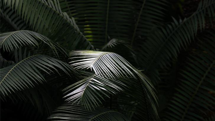green leaf plant Mac Wallpaper