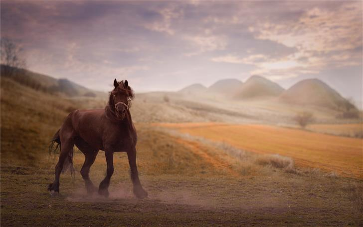 brown horse on brown ground with mountain backgrou Mac Wallpaper