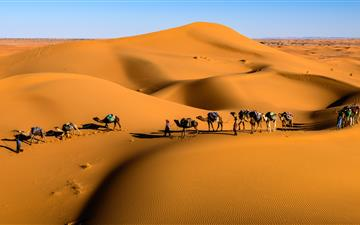 camels on desert under blue sky MacBook Pro wallpaper