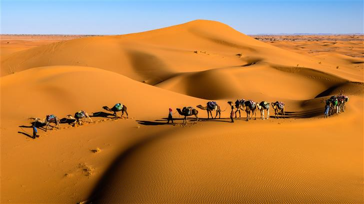 camels on desert under blue sky Mac Wallpaper