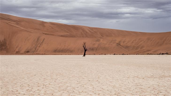 brown tree on dried ground at daytime Mac Wallpaper