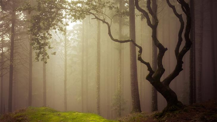 forest covered in fog during daytime Mac Wallpaper