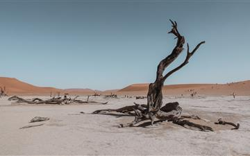 bare tree in the middle of desert MacBook Pro wallpaper
