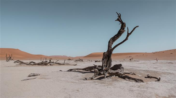 bare tree in the middle of desert Mac Wallpaper