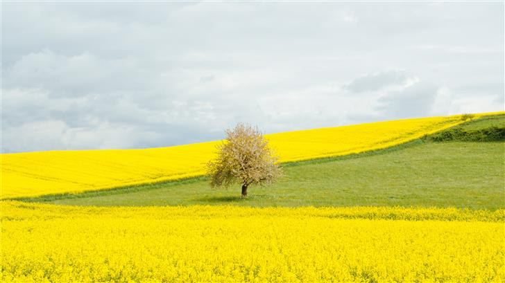 brown leafed tree near bed of yellow flowers Mac Wallpaper