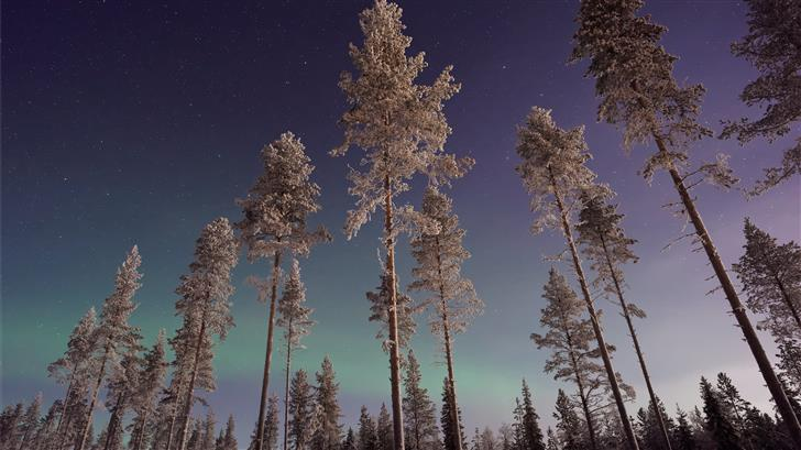 forest trees during night Mac Wallpaper