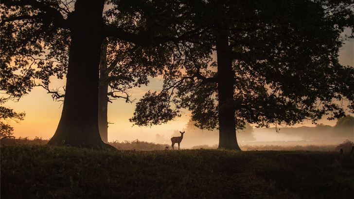 silhouette of a person standing near the tree duri Mac Wallpaper