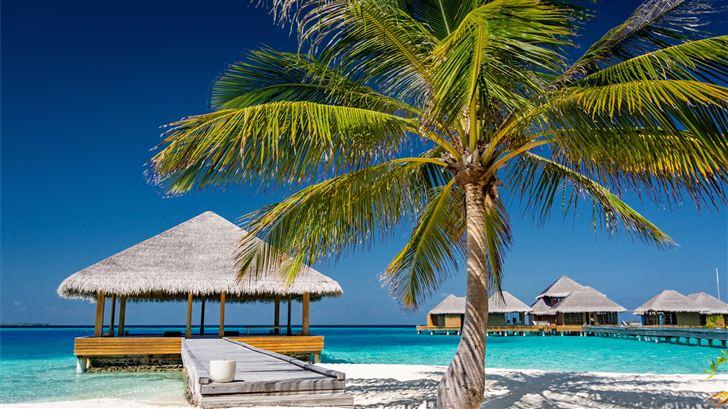 palm tree near body of water during daytime Mac Wallpaper