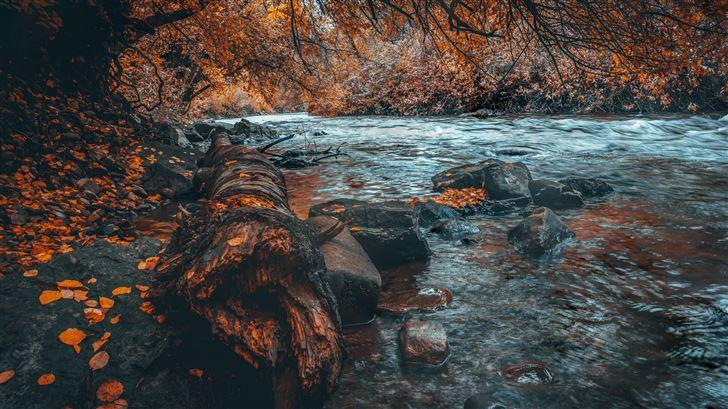 water body forest autumn 5k Mac Wallpaper