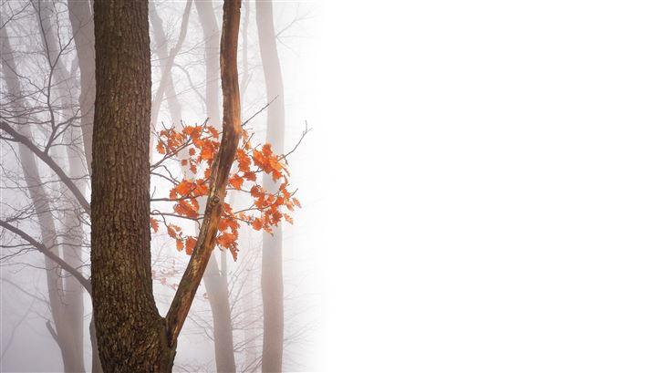autumn leaves fall 5k Mac Wallpaper