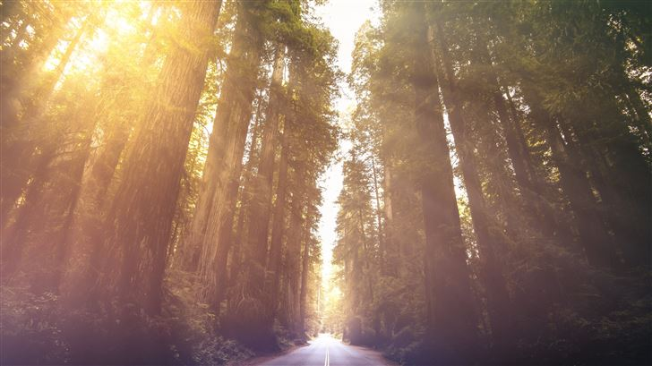 driving through red woods 5k Mac Wallpaper