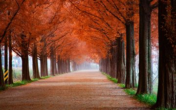 roadway surrounde by trees 5k iMac wallpaper