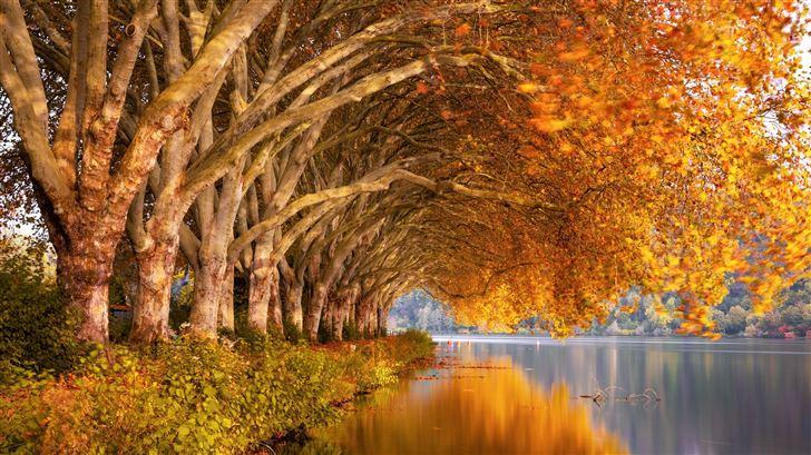 autumn trees orange lake 5k Mac Wallpaper