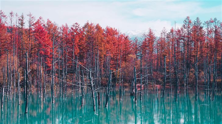 nature landscape trees forest fall water pond sky  Mac Wallpaper