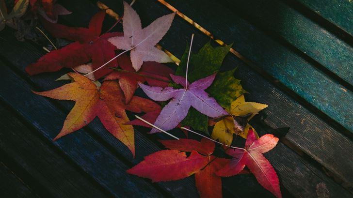 colorful leaves autumn 5k Mac Wallpaper