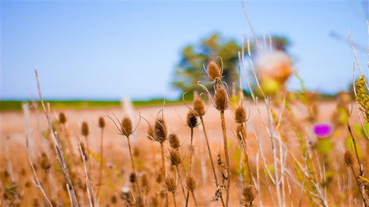 bokeh field crops 5k Mac Wallpaper
