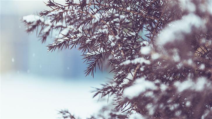 winter tree snow 5k Mac Wallpaper