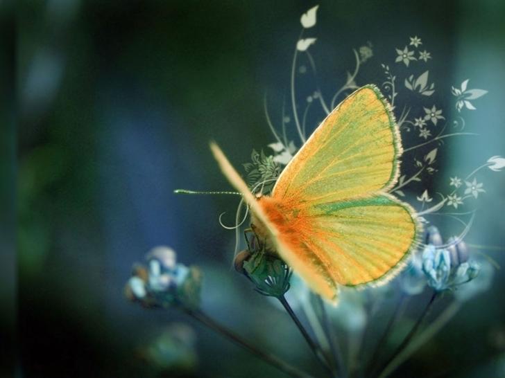 Yellow butterfly Mac Wallpaper