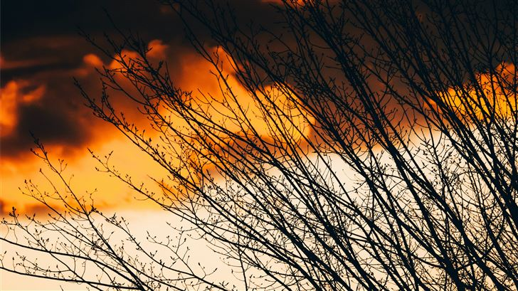 silhouette of bare tree under orange sky Mac Wallpaper