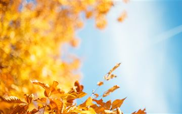 autumn leave MacBook Air wallpaper