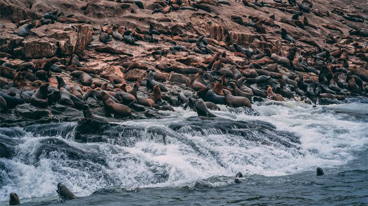 group of sea lions on shore Mac Wallpaper
