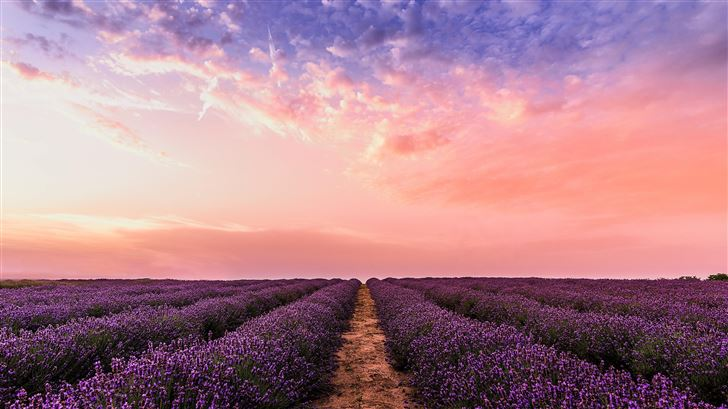 lavender field under pink sky 5k Mac Wallpaper