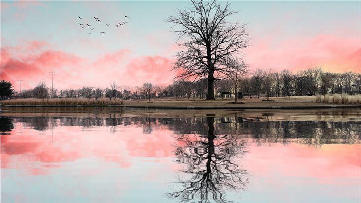 tree reflection 5k Mac Wallpaper