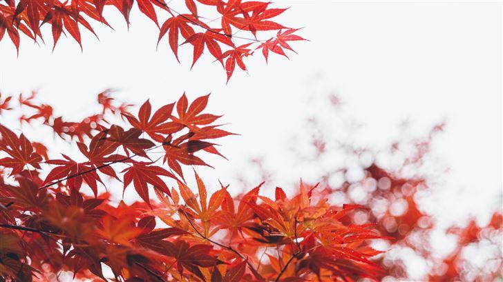 orange leaf tree 5k Mac Wallpaper