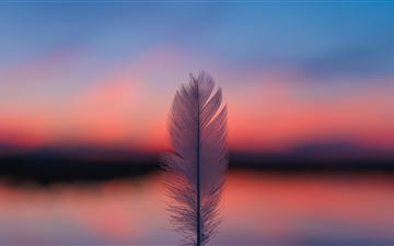 feather focus blur sunset 5k All Mac wallpaper