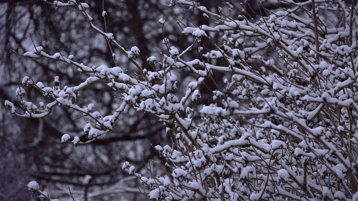 snowy branches 5k Mac Wallpaper