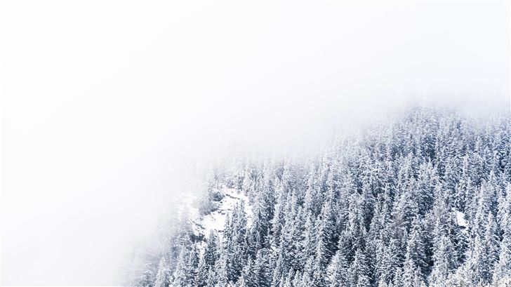 thick fogs hovering over snow covered pine trees Mac Wallpaper