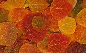 Autumn leafs Mac wallpaper