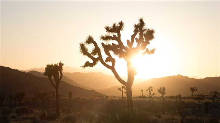 plant in desert with sun glaring behind Mac Wallpaper